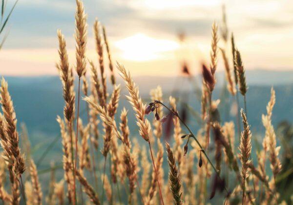 Meelunie; plant based, positive impact